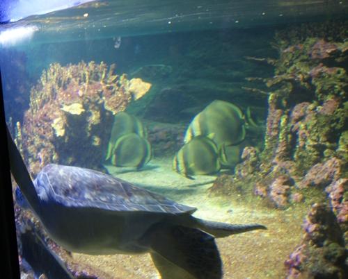 La colorata magia dell acquario la topina della valle for Acquario per tartarughe grandi