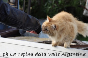 gatti badalucco 3