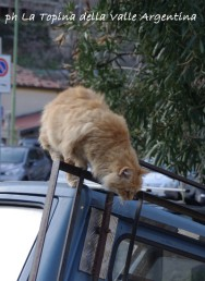 gatti badalucco2