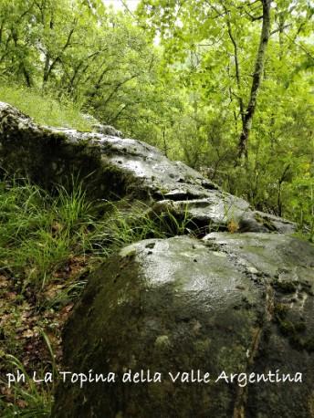 bosco pioggia