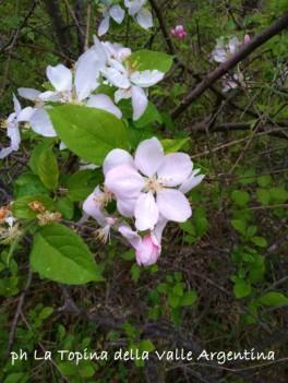 fiori selvatici2