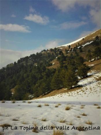 Monte Ceppo