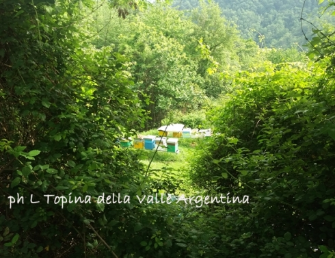 arnie api valle argentina2