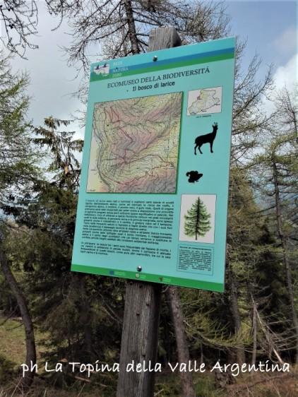 ecomuseo biodiversità bosco di larice Foresta Gerbonte