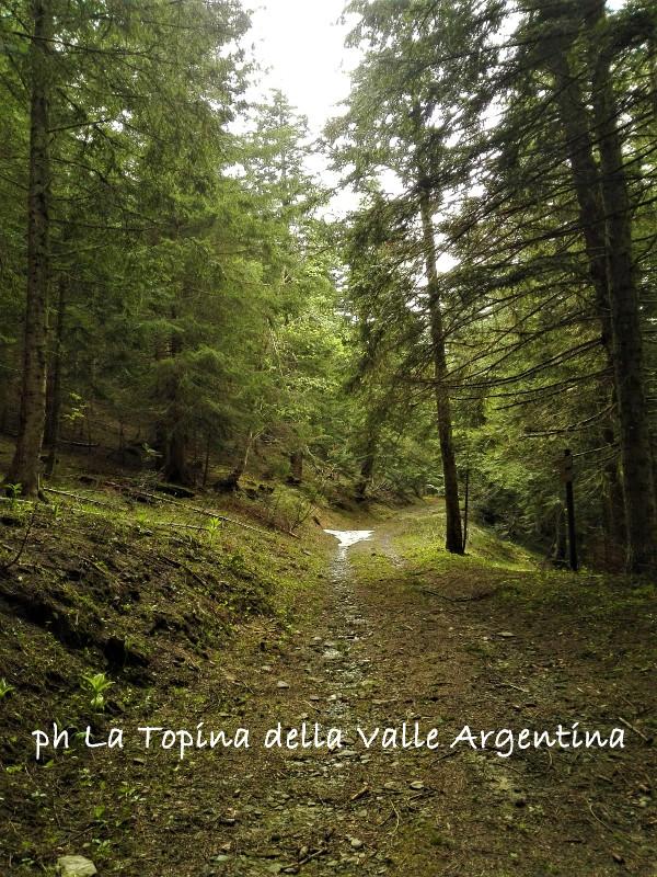 maggiociondolo | La Topina della Valle Argentina