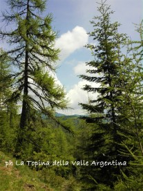 larici foresta di gerbonte