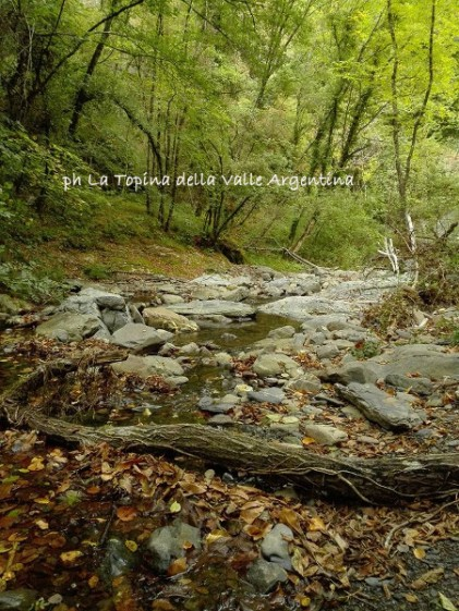 bosco torrente Molini di Triora