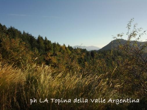 Bosco Triora - Valle Argentina