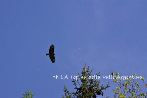 Rapace - Valle Argentina