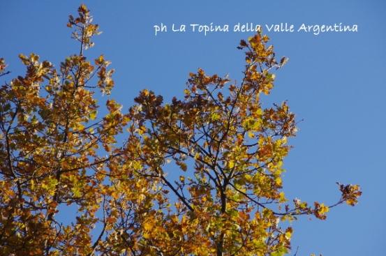 autunno valle argentina