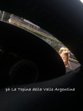 la topina della valle argentina