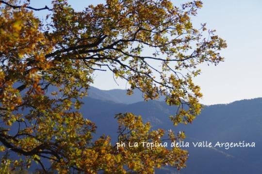 quercia valle argentina