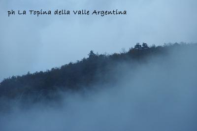 valle argentina autunno nebbia