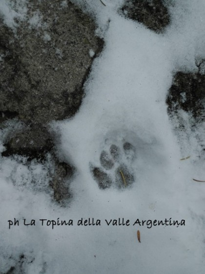 impronta gatto neve