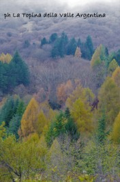 larici autunno2