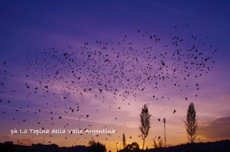 stornelli volo tramonto1