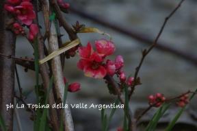 fiori cetta