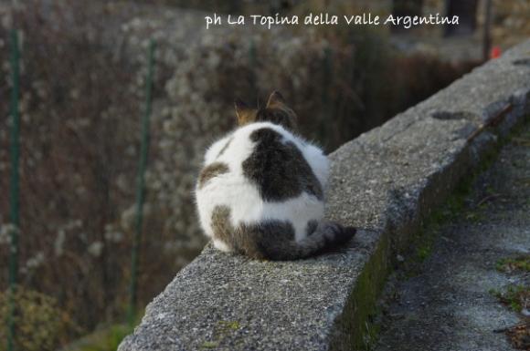 gatti cetta2