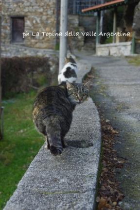 gatti cetta3