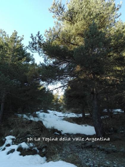 Sentiero Colle Sanson Valle Argentina