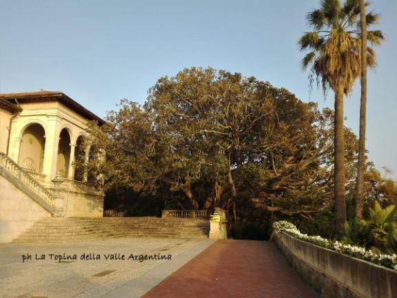 villa ormond sanremo ficus macrophylla