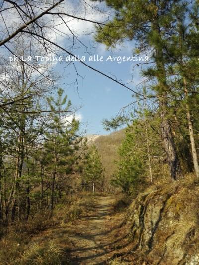 sentiero Andagna pini
