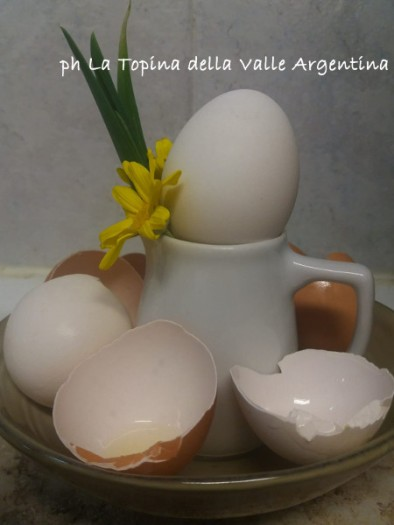 uova gusci