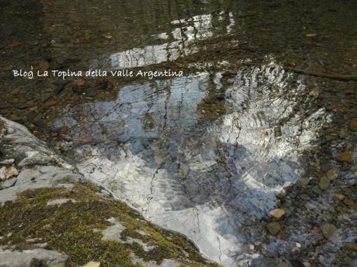 acqua torrente gerridi.jpg