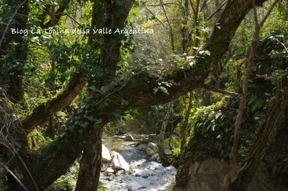 bosco valle argentina fiume