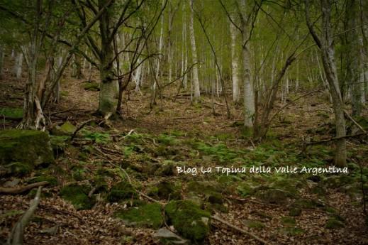 bosco di rezzo