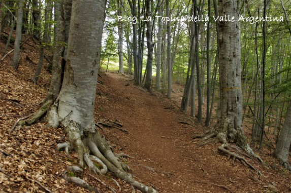 bosco radici