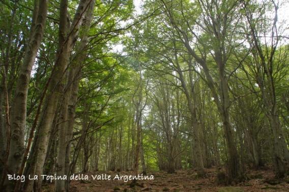 bosco rezzo