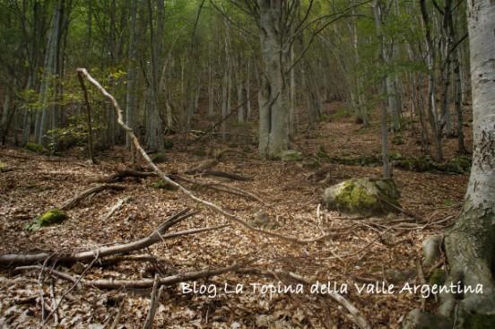 bosco rezzo2