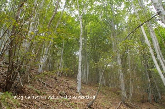 bosco rezzo3