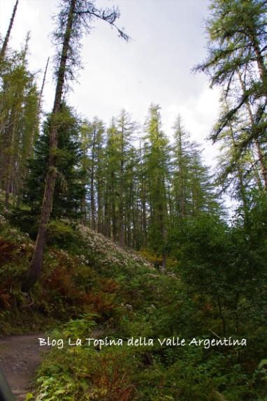 bosco collardente - sanson