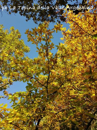 castagni autunno