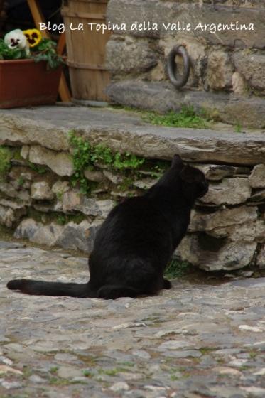 gatto triora