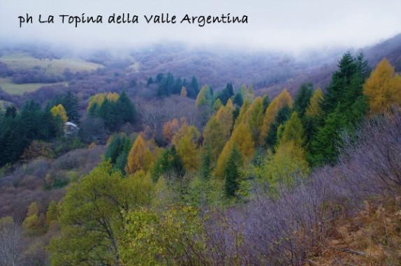 larici autunno3