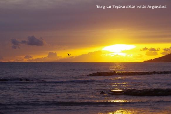 tramonto gabbiani