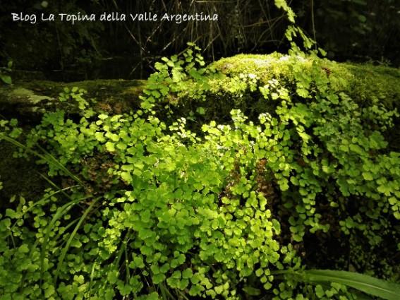 vegetazione Glori