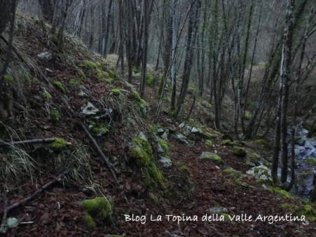 muschio bosco